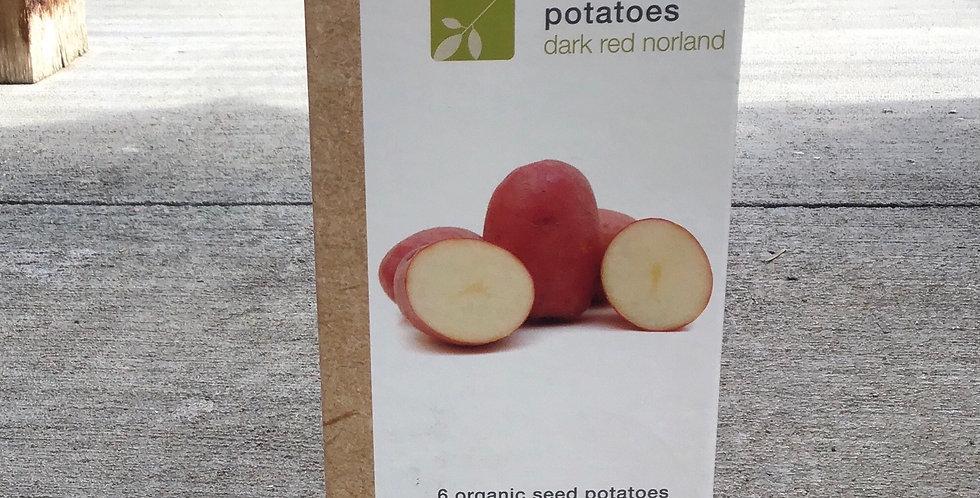 6 Organic Seed Potatoes Solanum tuberosum 'Dark Red Norland'