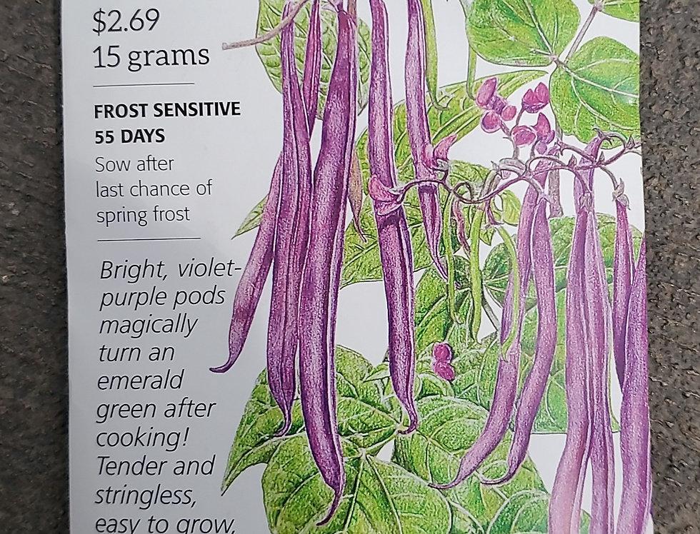 Bean Bush Royal Burgundy Organic
