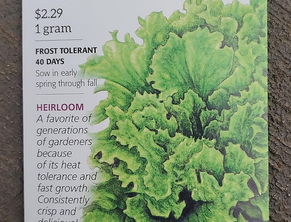 Lettuce leaf Black Seeded Simpson Organic