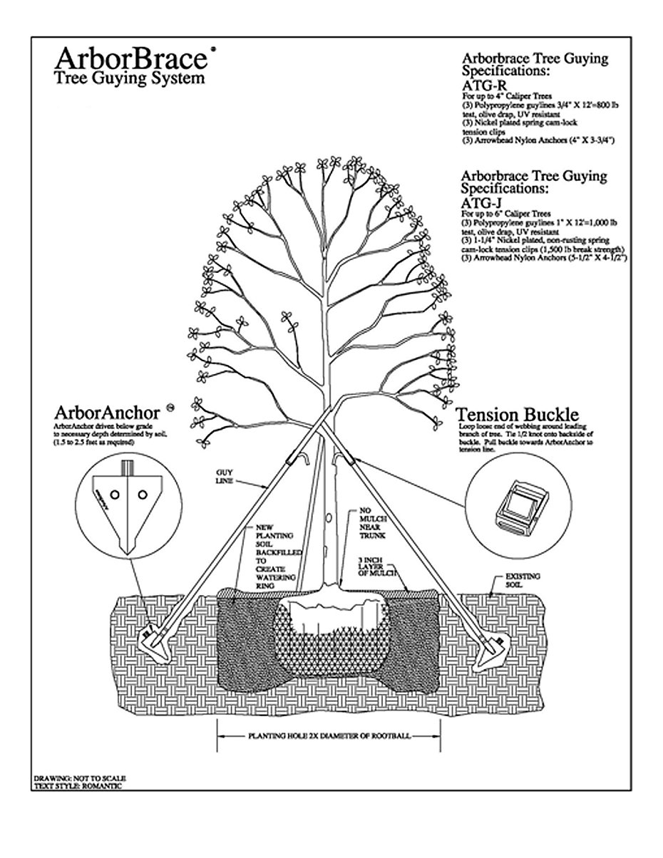 ARBORBRACE HOW TO 2.jpg