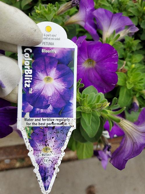 Petunia color blitz blueriffic 4.25 premium