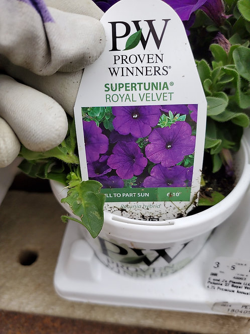Petunia Royal Velvet 4.25 proven winner