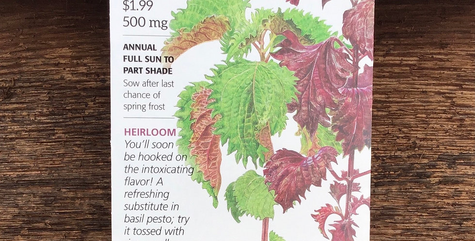 Shiso  Perilla  green and red