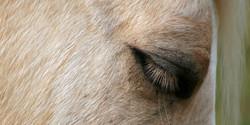 Yank-Eye1[1].jpg
