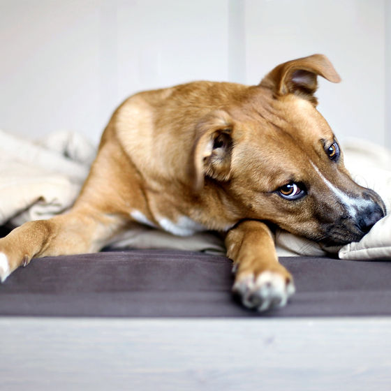 Rescue Puppy_edited.jpg