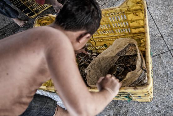 """Maikel Soto (13) trabajando seleccionando """"Cangreja"""" que es lo que principalmente se pesca en el pueblo. Barranquitas, Zulia. Venezuela. 2015."""