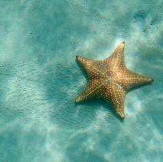 12. sea star.jpeg