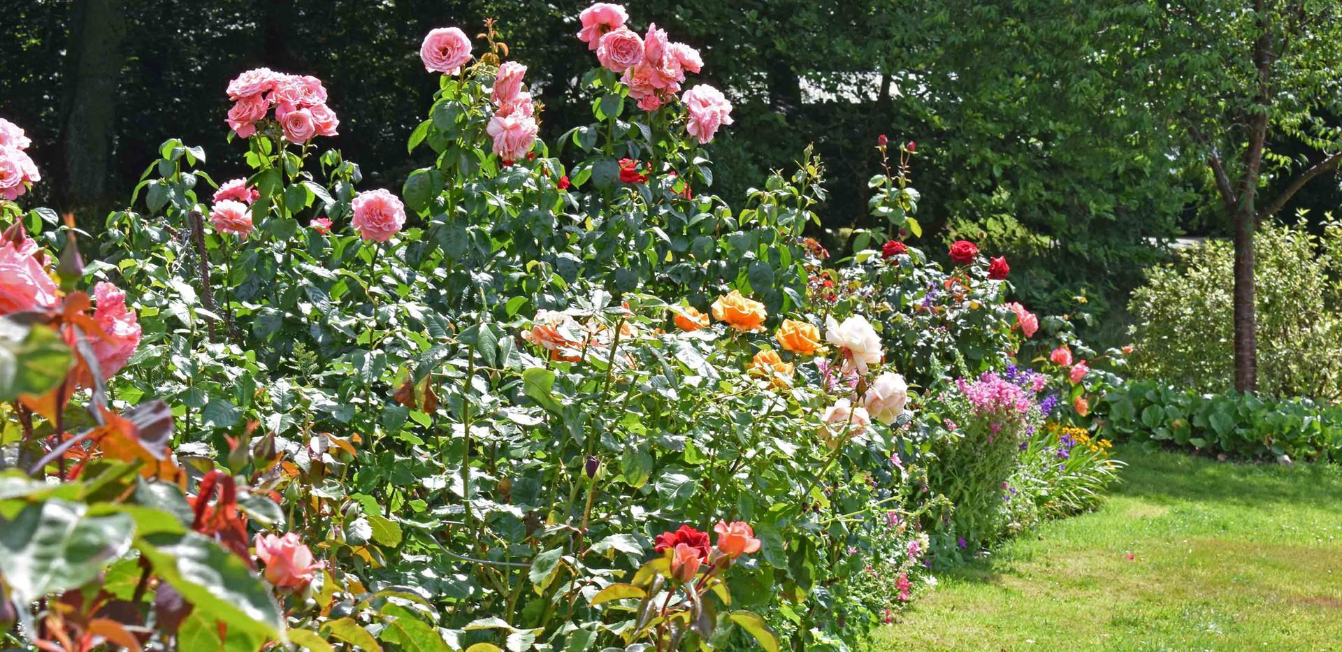 The Rose Border