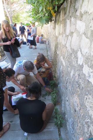 Sauvages de PACA à Grasse : Retour sur la formation en pays grassois