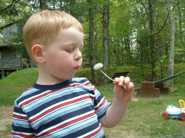 Little boy blowing on a wish flower