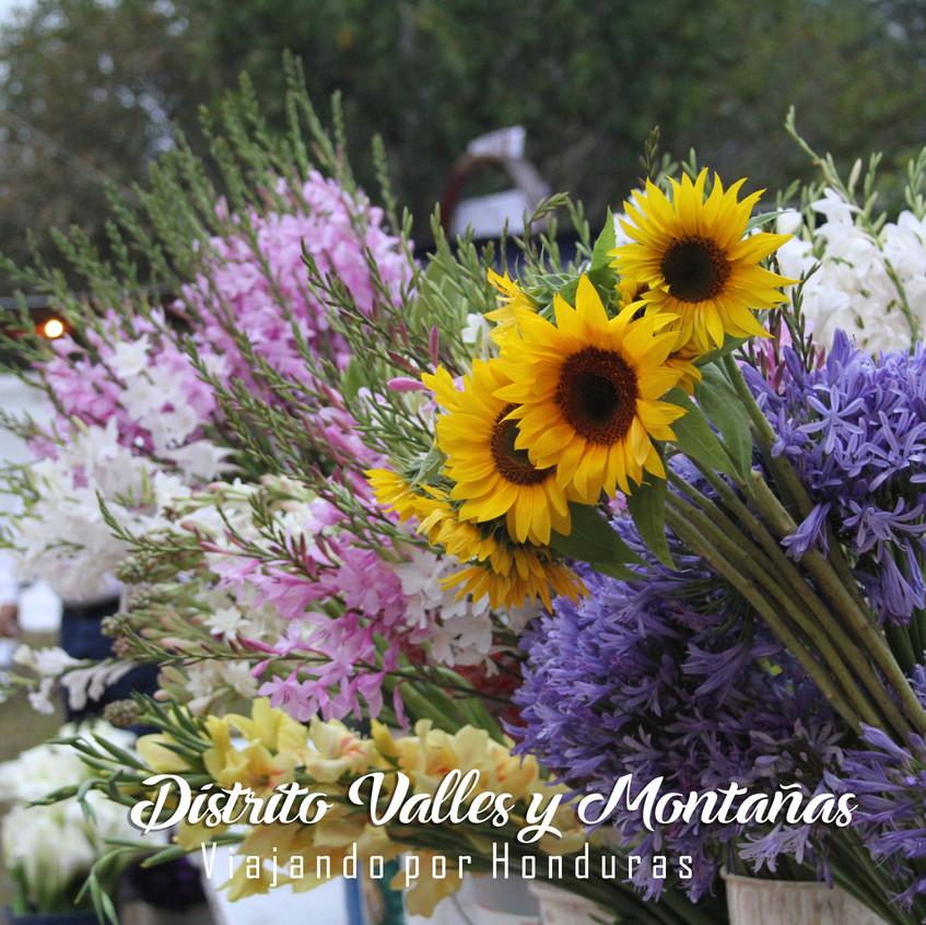 Flores de Santa Lucía
