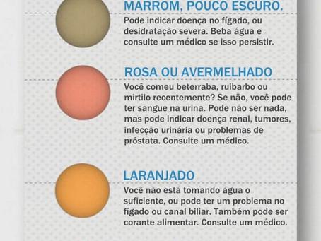 Características da Urina