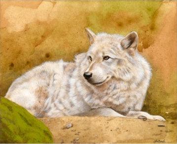"""White Wolf, 5""""x4"""""""