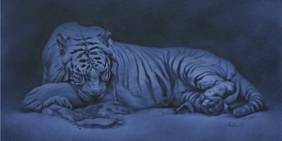"Night Tiger, 20""x10"""