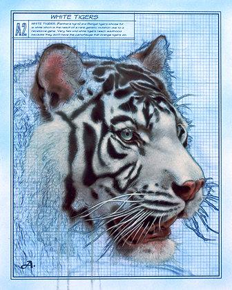"""White Tiger, 16""""x20"""""""