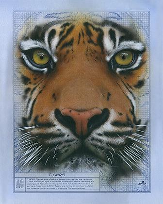 Tigers, 16x20