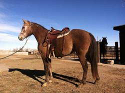 First time saddled