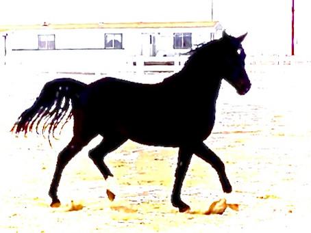 Goal-setting in horsemanship