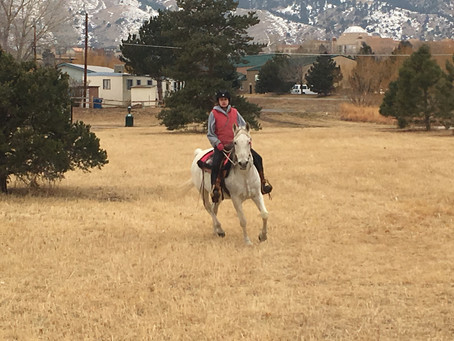 The role of reward in horse training