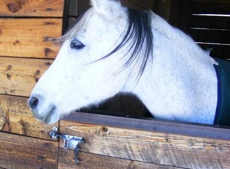 Horsey Housing