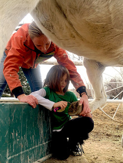 Grooming and horse stewardship