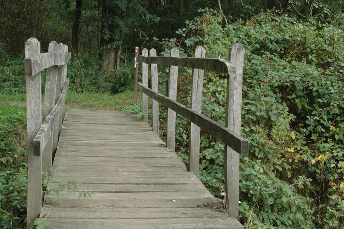 De wandelpaden rondom de vijvers van Horst