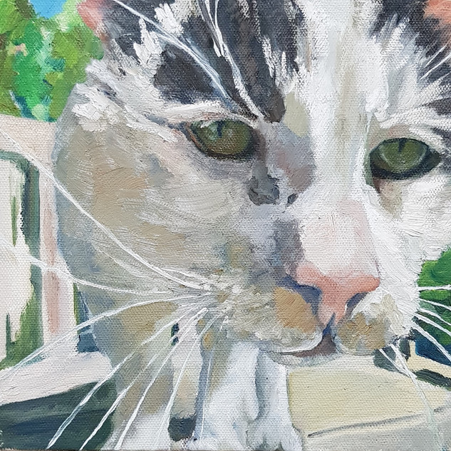 Buster Oil on Canvas, 30cm x 30cm, Nicki Rolls, £150 (all proceeds - £150 - will go to Trussel Trust food bank charity) All my works are available for viewing prior to purchase - feel free to email.