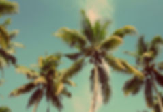 Palm Trees in Sunny Honolulu, Hawaii