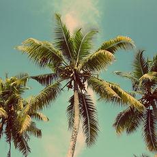 Ilhas e Mergulho | Condominio Boiçucanga