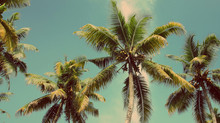 Palm trees, I love them