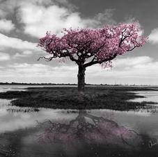 Isolation Tree in black white & pink