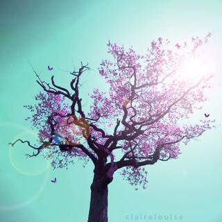 !!NEW!! Spring's Blush