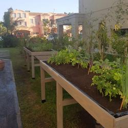 Urban Farm Huertas 10