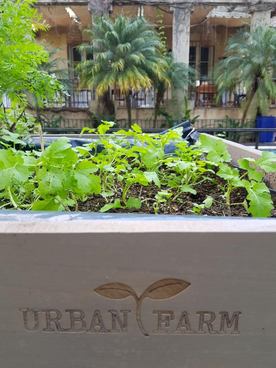 Urban Farm Huertas 8
