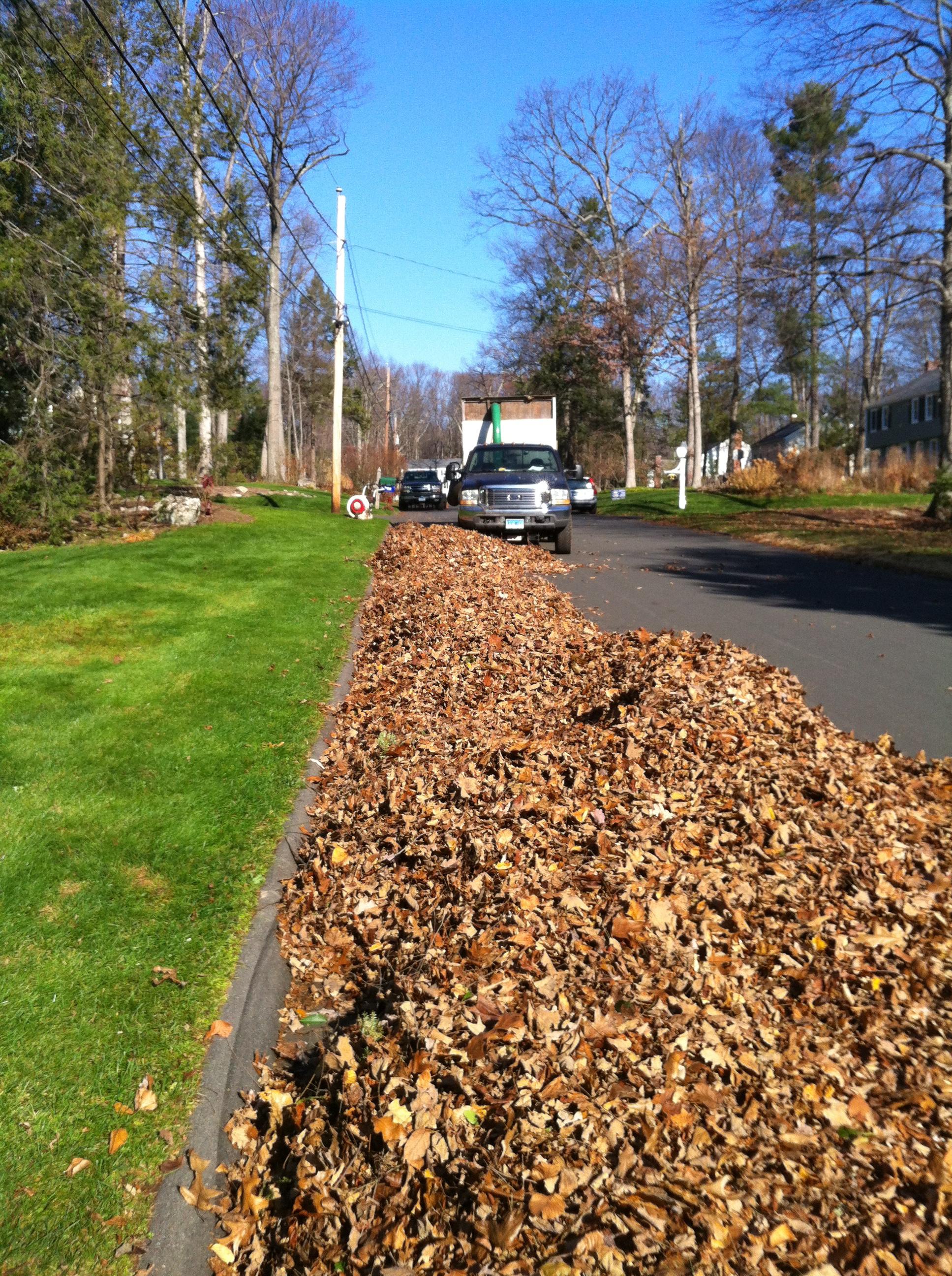 Curbside Leaf Removal