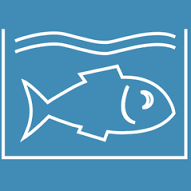 Comment choisir ses produits de la mer en respectant notre environnement ?