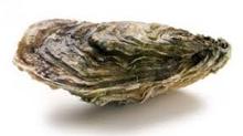 Histoire d'huitre, laquelle consommer et pourquoi, explications