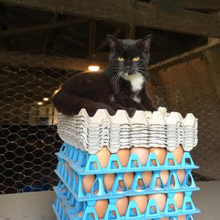 Naughty cat!
