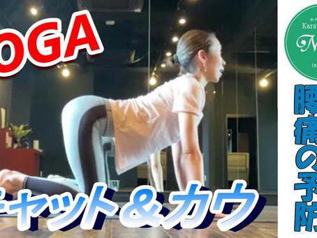 【ヨガ】キャット&カウ【腰痛の改善 腰痛の予防】