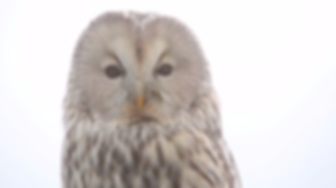 Icarus OWL to Camera.png