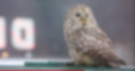 Icarus Owl Diner sign.png