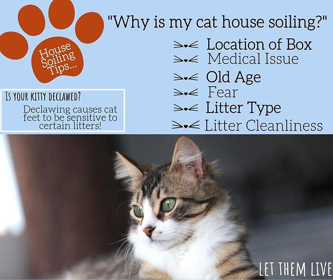 litter box.jpg