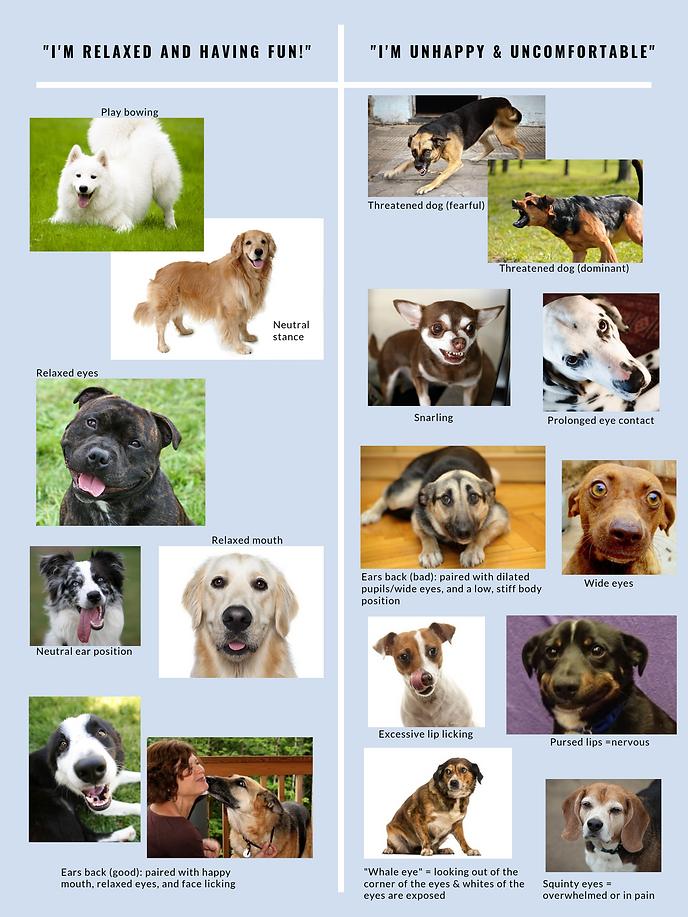 dog bite prevention 2.png