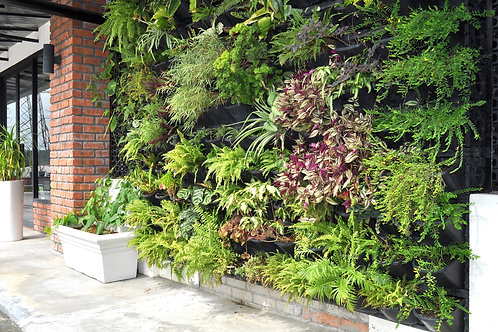 green wall @ 1200/sft