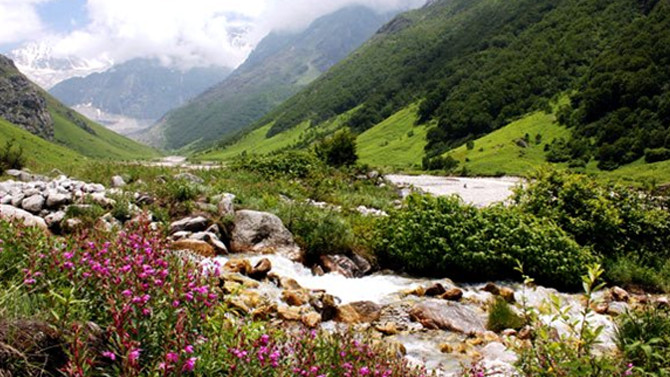 Best Wildlife Safari in Uttarakhand