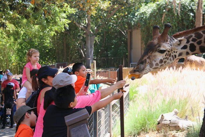 """Best wildlife safari in uttarakhand"" , ""top wildlife safari in uttarakhand"",""wildlife safari in uttarakhand"" , ""top safari in uttrakhand"" ,  ""best safari in uttarakhand"" , ""Camping in jim corbett"" , ""Uttarakhand Birding tour in jim corbett"" , ""Jungle safari in jim Corbett"" ,  ""jeep safari in jim corbett"" , ""best jungle safari in uttarakhand"" , ""birding tour in uttrakhand"""
