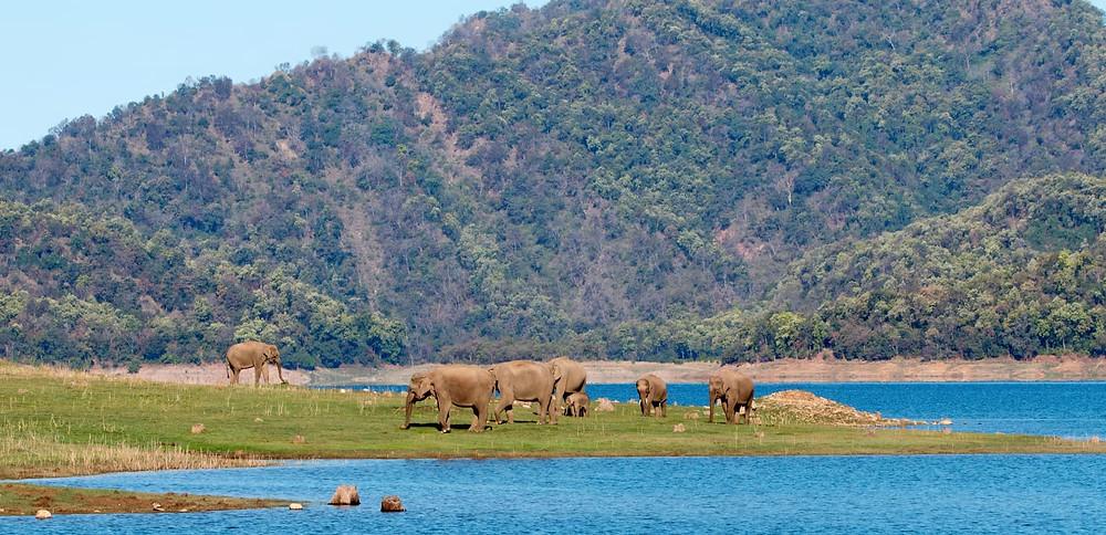 Best Wildlife Safari in Uttarakhand