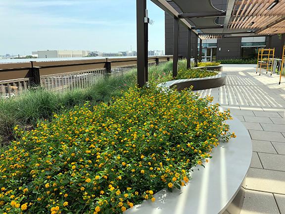 Zachry Rooftop Garden