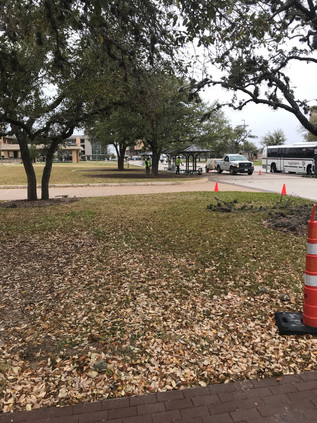 GROUNDS TREE PROJECTS AT MSC AND RUDDER BUILDING
