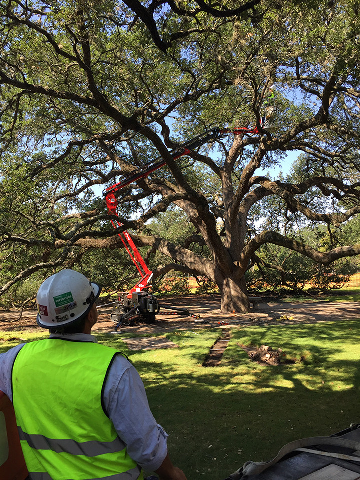 Adding Lightning Protection to Century Tree